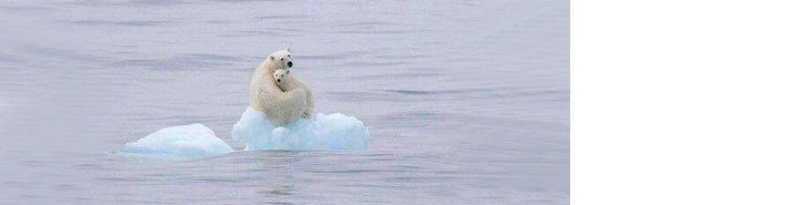buzul.jpg