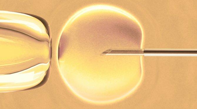 embriyo-transferi.jpg