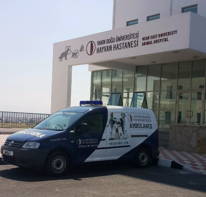 hastane-ambulans-hayvan.jpg