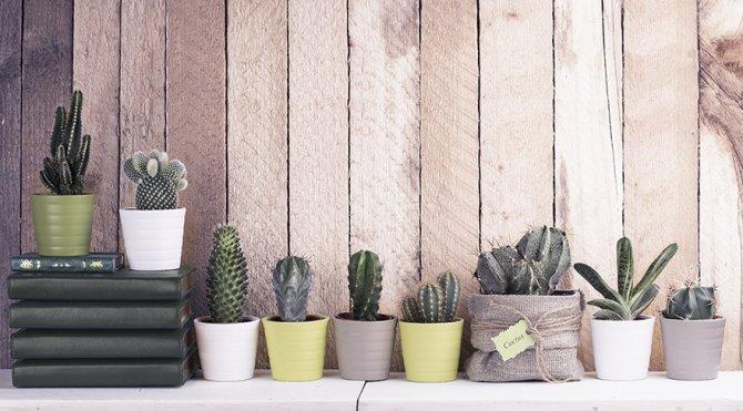 kaktus-2.jpg