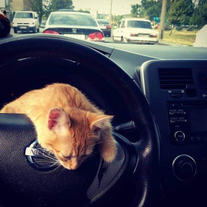 kedili_taksi_ukrayna_1.jpg