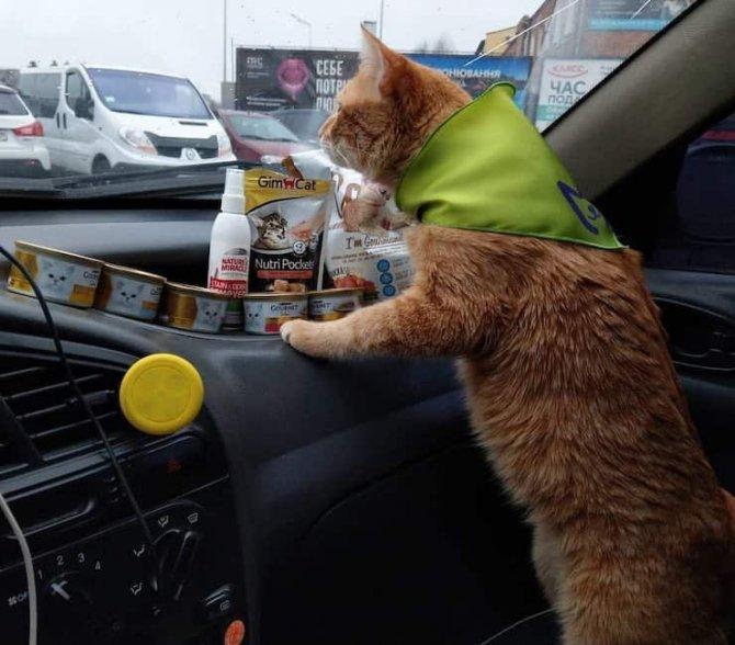 kedili_taksi_ukrayna_4.jpg