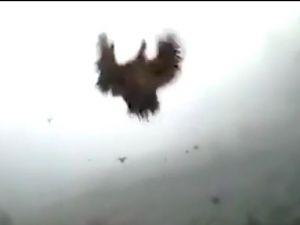 Uçan tavuklar!